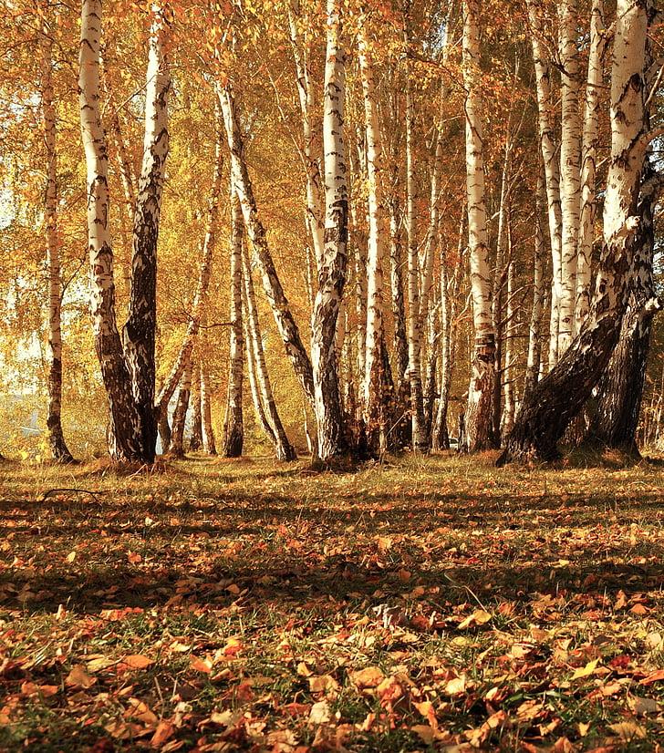 leaves, autumn, trees, forest, landscape, nature, fairy tale