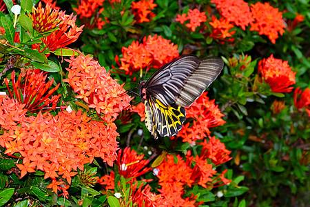 пеперуда, пеперуда цвете, цвете, природата, Градина, цвят, цветни