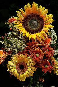 lill, päevalill, lill, päevalill, kollane, looduslik, taim, lilled