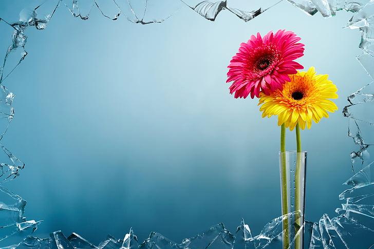 obres d'art, colors, Art, flors, Gerro, Arranjament, groc