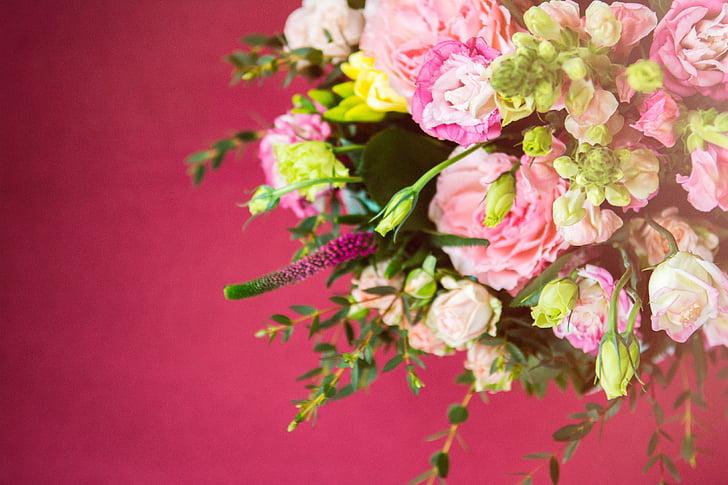 Rosa, flors, pètal, flor, flor, jardí, planta