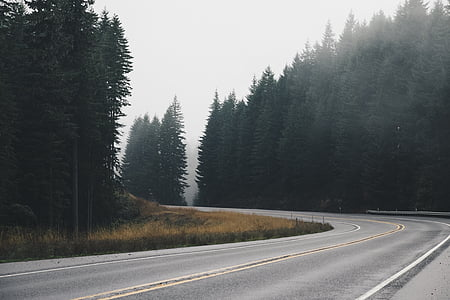 curve, firs, fog, forest, haze, nature, road