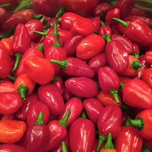 kuuma paprika, chili, kuum, vürtsid, taimne, toidu, punane