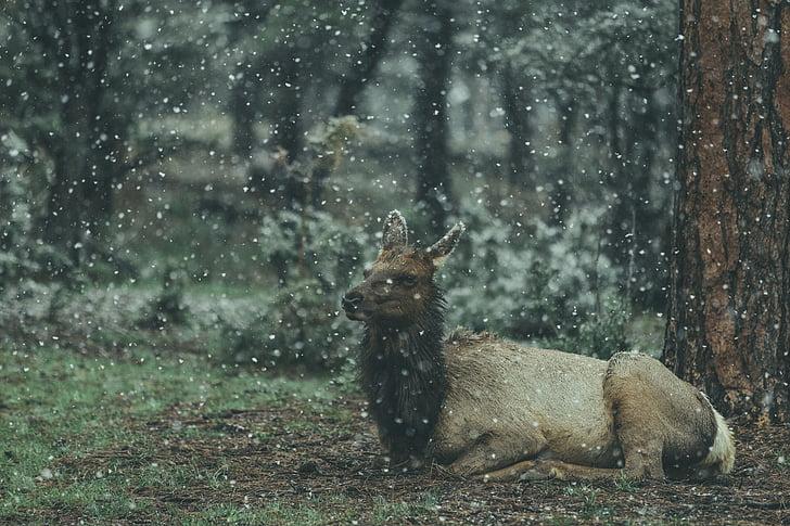 animal, wildlife, forest, nature, snow, winter