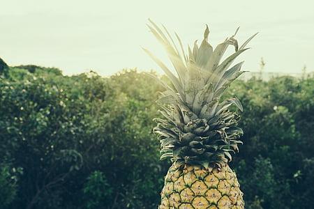 color, color, aliments, fruita, a l'exterior, pinya, arbres