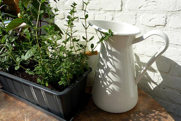 bilje, biljka, lonac, sjena, Sunce, vrt, jestivi