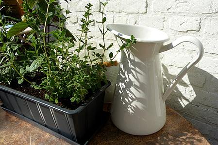 herbes, planta, olla, ombra, sol, jardí, comestibles