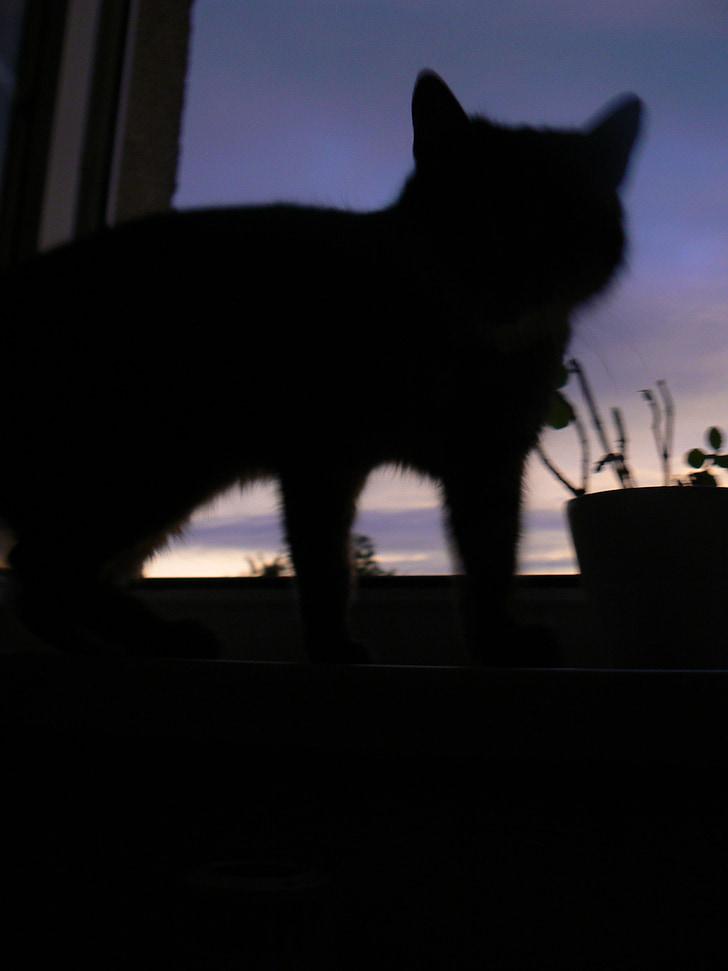 katt, siluett, skugga, väst, ljus och skugga
