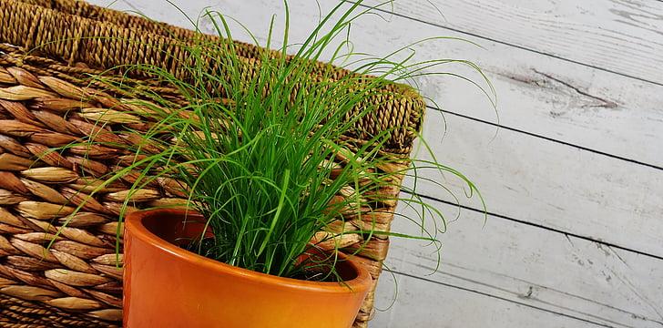 herba, aigua jacints, cistella, planta, producte natural, color verd, no hi ha persones