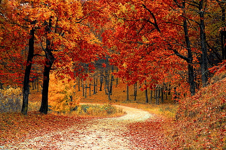 fall, autumn, red, season, woods, nature, leaves