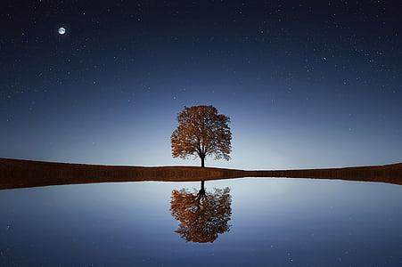 koks, saules gaismā, fons, atpūta, relaksējoša, ēna, dzīvesveids