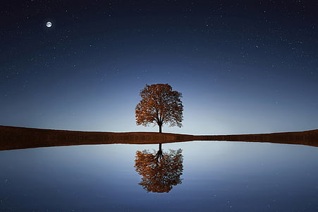 träd, solljus, bakgrund, avkoppling, avkopplande, skugga, livsstil