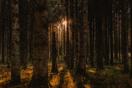 forest, trees, landscape, nature, panorama, mood, germany