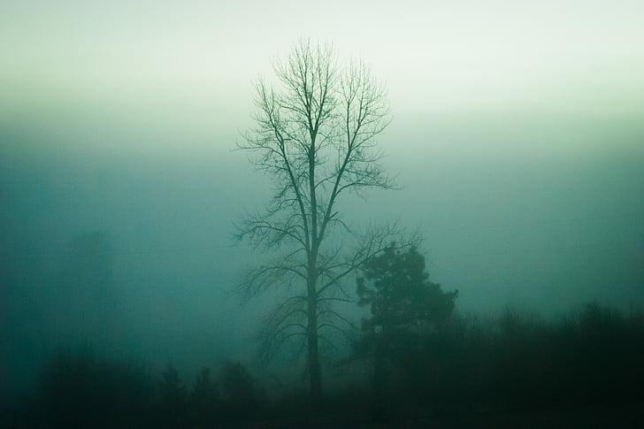 arbres, natura, boira, boira, arbre, bosc, boira
