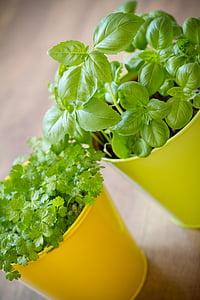 药草, 壶, 植物, 种植, 花园, 中心, 食品