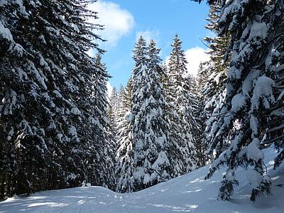 jedle, jedle, stromy, zasněžené, Zimní, sníh, obloha