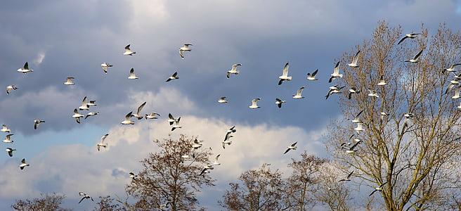 ocells, gavines, eixam, volar, animals, vol, Dom