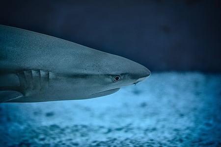 животните, аквариум, мъгла, едър план, риба, фокус, океан