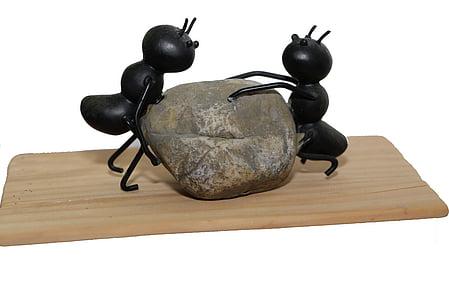 formigues, fort, pedra, poder, natura, equip, canvi