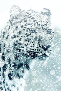 leopard, cheetah, animal, cat, big cat, carnivores, africa
