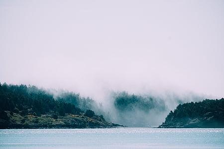 nebbia, foresta, Lago, paesaggio, nebbia, natura, fiume
