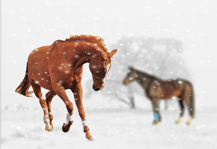 winter, horses, play, snow, animal, nature, snow landscape