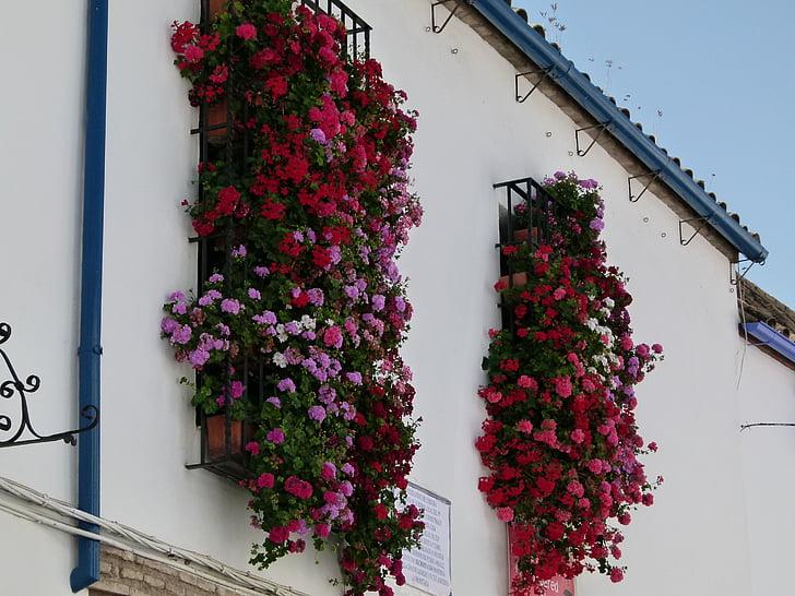 cordoba, spain, house, building, flowers, windows, summer