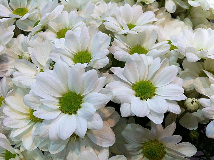 gėlės, Gamta, baltos gėlės