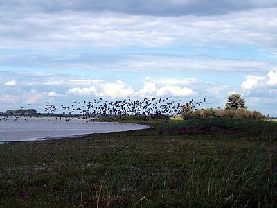 นกอพยพ, ฝูงนก, ทะเลสาบ, น้ำ, นก, บิน, ธรรมชาติ