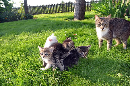 cat, family, pet, love, happy, animal, young