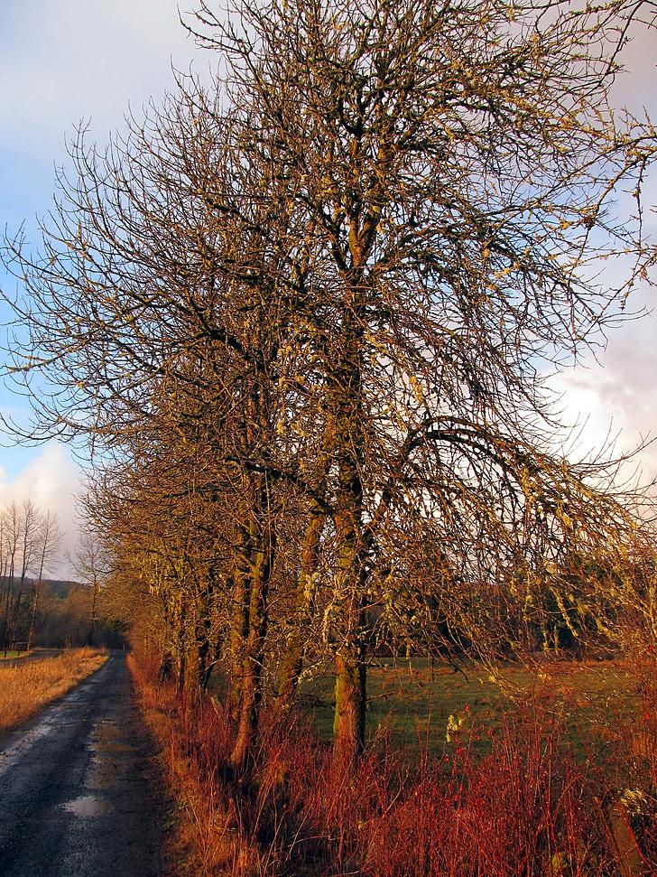 lane, road, country, trees, landscape, farm