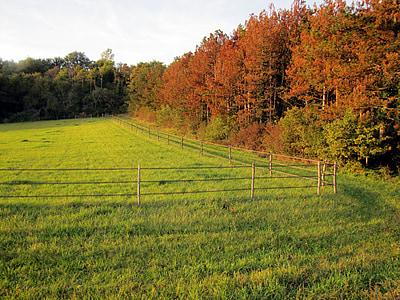 fields, trees, fall, landscape