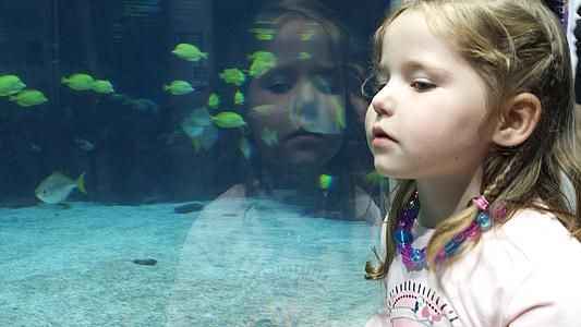 girl, child, fish, reflection, aquariam, kid, childhood