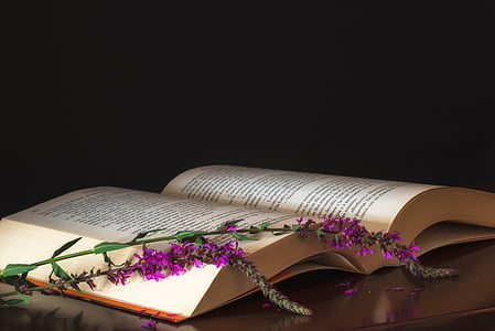bodegones, boek, lezing, Kleur, Stilleven, kleuren, Bladeren