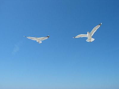 cel, gavines, l'estiu, Dom, blau, ocell, volar