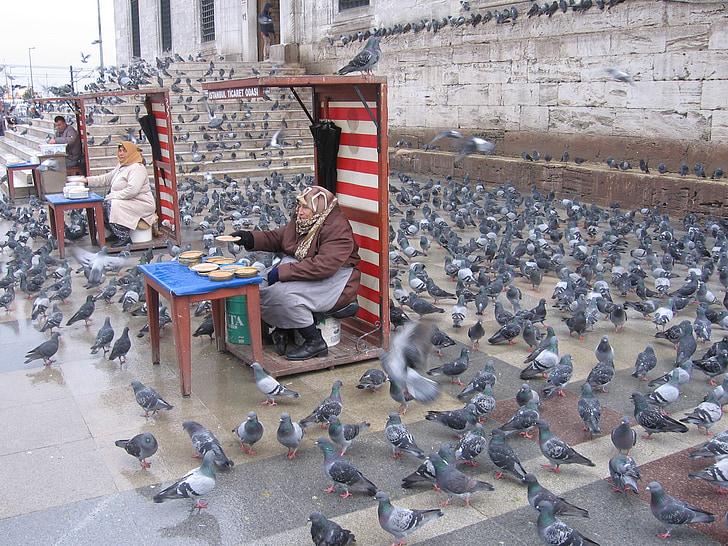 гълъби, Истанбул, хранене, стар, хранене птици