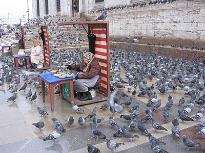pigeons, istanbul, feeding, old, feeding birds