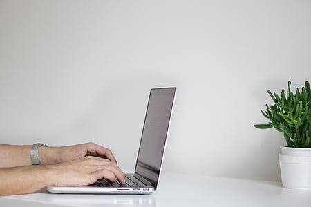 ordinador, electrònica, mans, portàtil, planta, planta, taula