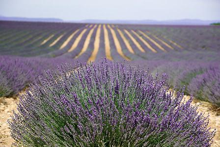 Provença, valensol, lavanda, Perfum, Provença-Alps-Costa Blava, porpra, altiplà De Valensole