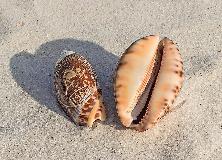 simpukat, Matkamuisto, Beach, Sand