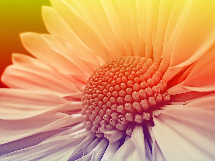 Blossom, nở hoa, Hoa, đầy màu sắc, thực vật, đóng, hoa mùa hè