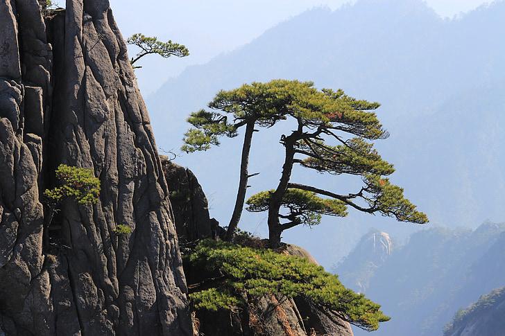 Cina, Huangshan, montagna, paesaggio, roccia, natura, albero