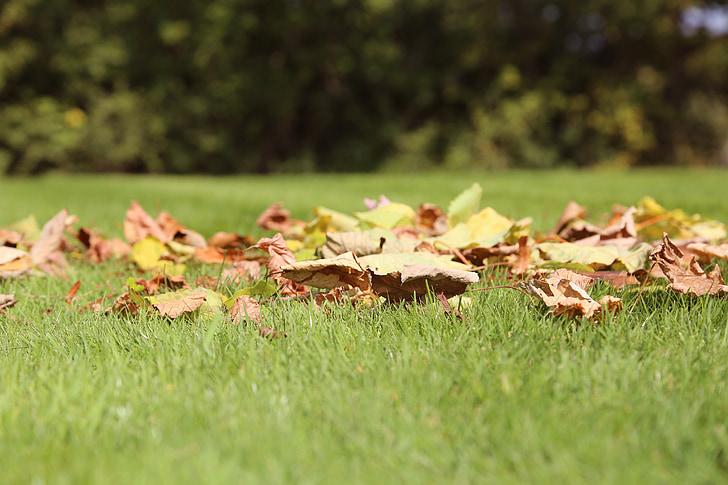 leaves, grass, autumn leaves, autumn lawn, september, green lawn, green grass