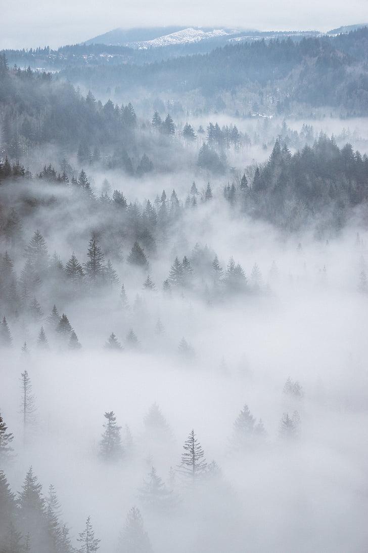 aérea, nevoeiro, floresta, floresta, árvores, verde, montanha