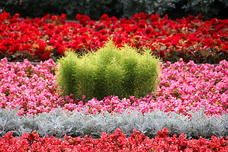 lilled, voodi, Aed, Bloom, Park, taim, kevadel