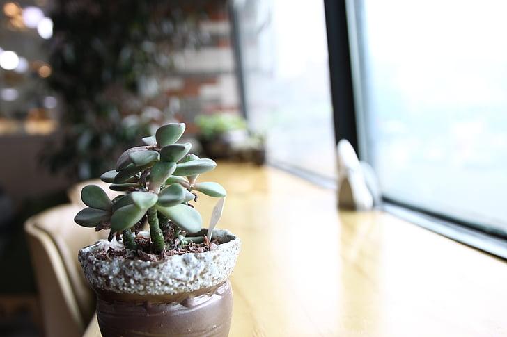mäsité v tejto, Zelená, tráva, zelený deň, liečenie kaviareň, rastlín