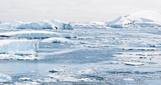 Antarktis, Ice, mössor, bergen, pingvin, isberg, södra halvklotet