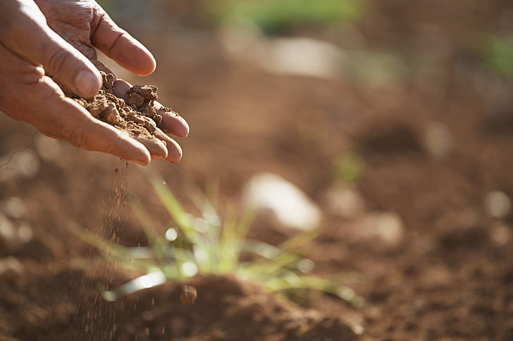 soil, plant, earth, dirt, nature, agriculture, growth