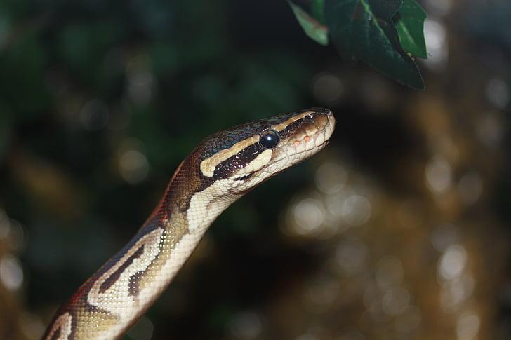 Python Kieli