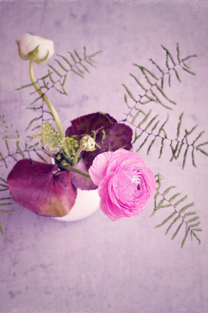 flor, Ranunculus, Rosa, flor, flor, flor rosa, Rosa ranunkel